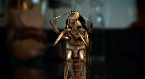 Cockroach_web